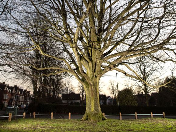 Un arbre de Verdun au Spencer Park de Coventry.  (Photo: D Warren/WTML)